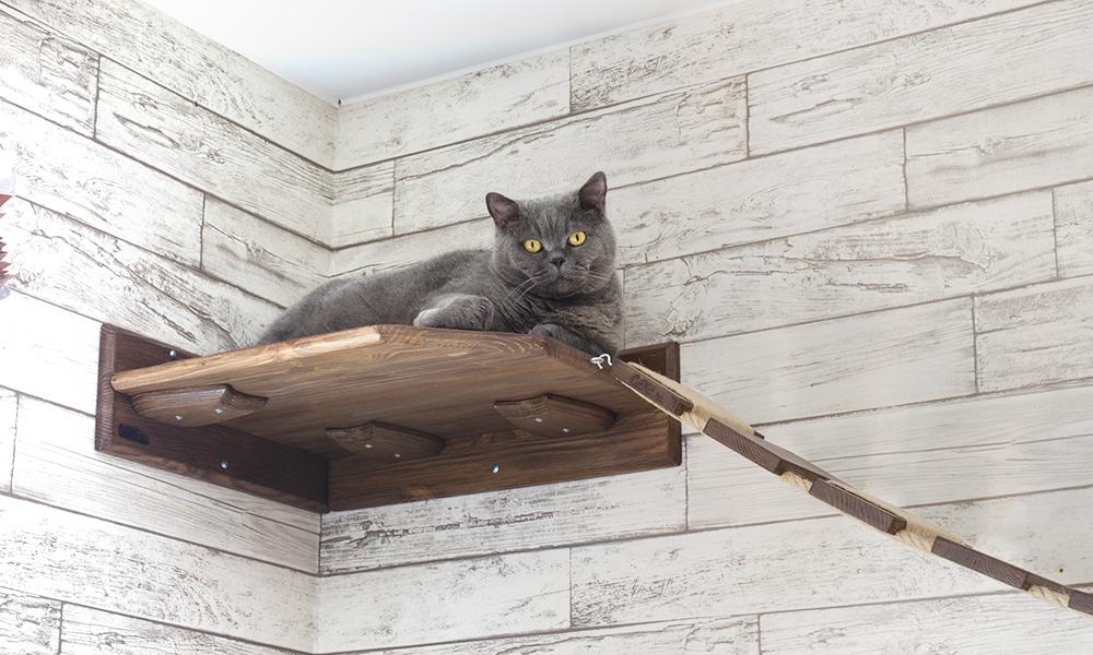 Настенная лежанка для кота