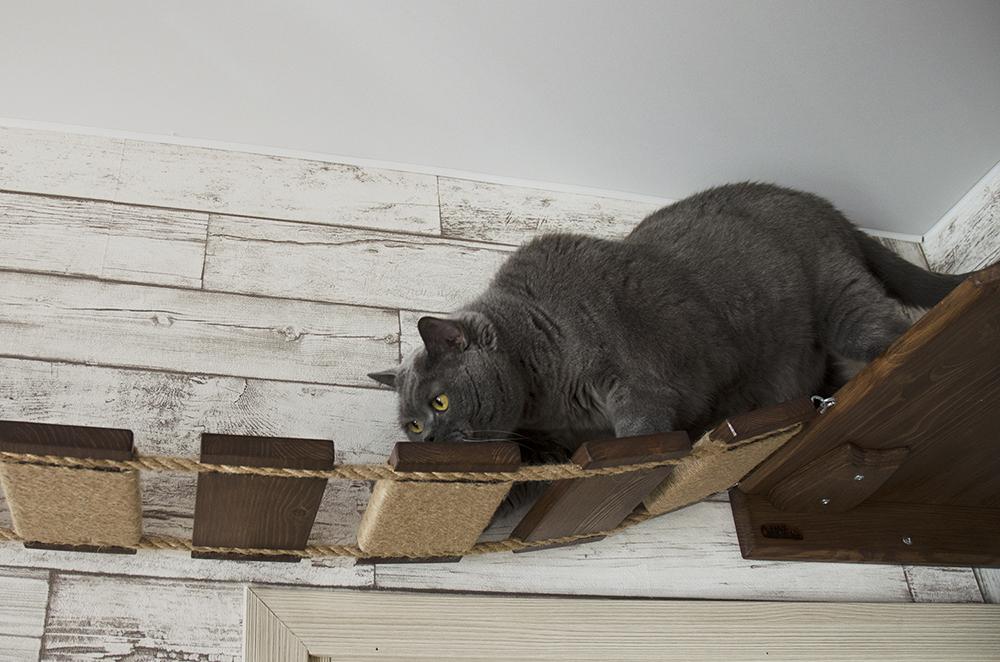 Мостик лесенка для кошек шоколад