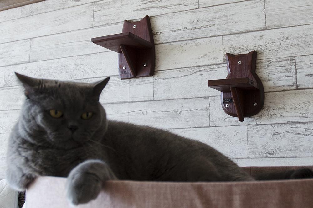 Красная полочка кошка